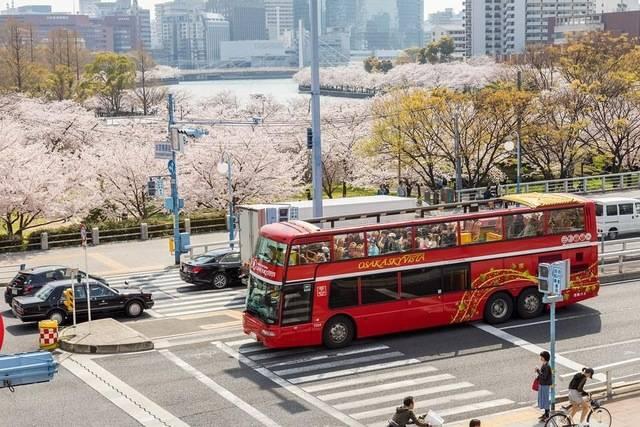 スカイビスタ桜.JPG
