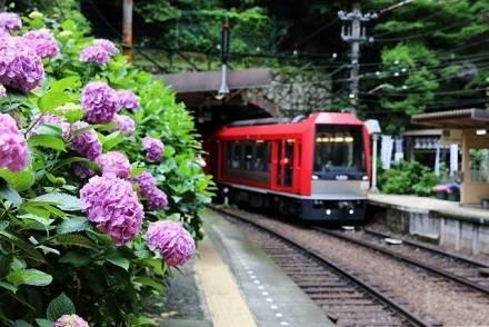 曇り空だからこそ行くべき、あじさいの名所5選! 関東・関西発バスツアーで行けるスポット&周辺の観光地