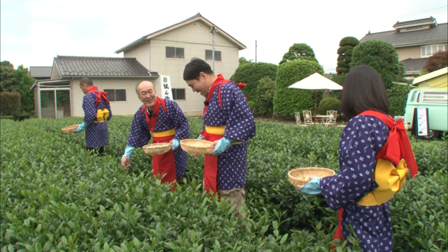 茶摘み体験.png