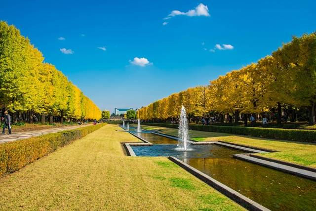 国営昭和記念公園.jpg