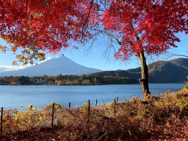 河口湖の紅葉.jpg