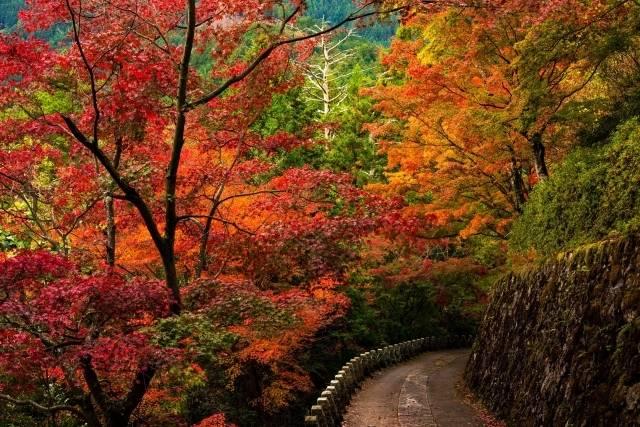 吉野山・紅葉