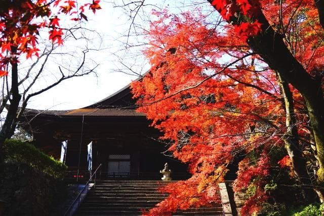 三井寺・紅葉